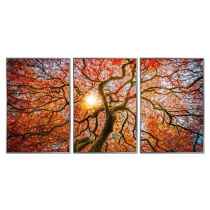 Autumn Tree - Framed Acrylic Pictures (Set of 3)