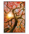 Autumn Tree - Framed Acrylic Pictures (Set of 3) - Middle Picture