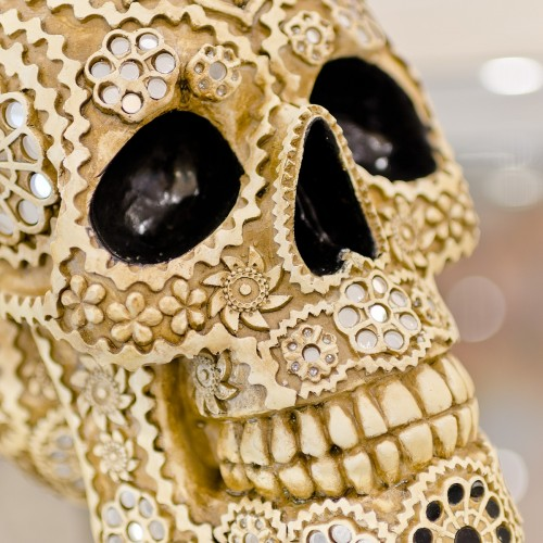 Decorative Model Skull Close Up