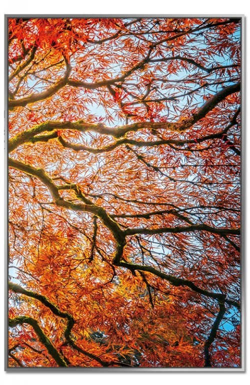 Autumn Tree - Framed Acrylic Pictures (Set of 3) - Right Picture