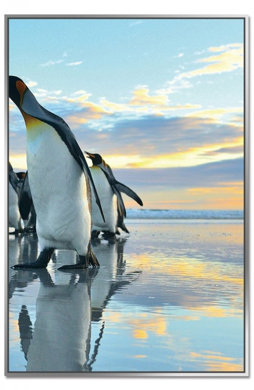 Framed Acrylic Pictures - Penguin March (Set of 3) - Right Picture