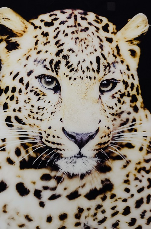 Cheetah glass art picture detail